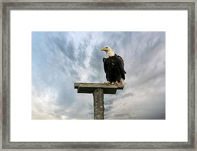American Bald Eagle Perched On A Pole Framed Print