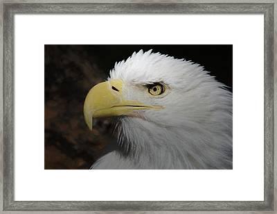 Framed Print featuring the digital art American Bald Eagle Portrait 2 by Ernie Echols