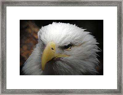 Framed Print featuring the digital art American Bald Eagle Portrait 3 by Ernie Echols