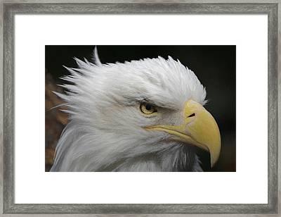 Framed Print featuring the digital art American Bald Eagle Portrait by Ernie Echols