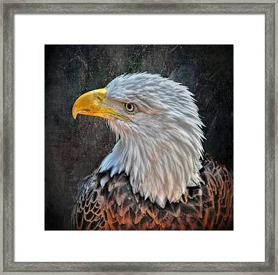 Framed Print featuring the photograph American Bald Eagle by Savannah Gibbs