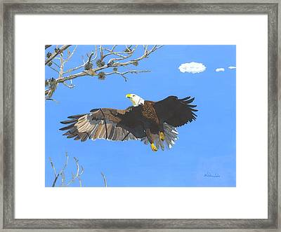 American Bald Eagle Framed Print by William Demboski