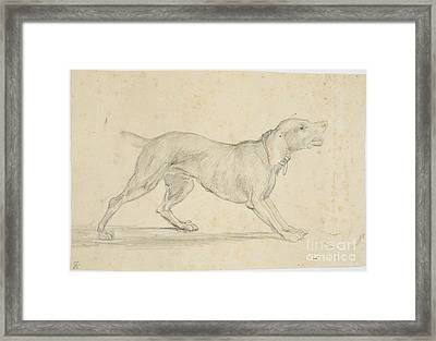 American Barking Dog In Profile Framed Print by MotionAge Designs