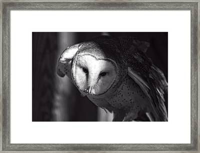 American Barn Owl Monochrome Framed Print