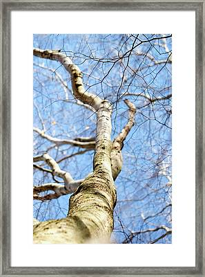 Framed Print featuring the photograph American Beech Tree by Christina Rollo