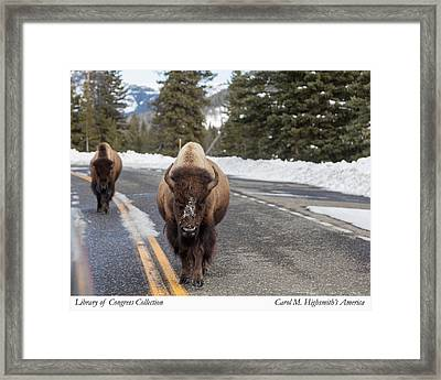 Framed Print featuring the photograph American Bison In Yellowstone National Park by Carol M Highsmith