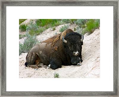 American Bison Framed Print by Karon Melillo DeVega