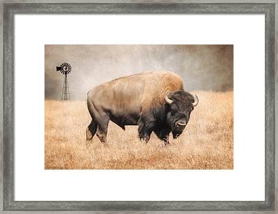 American Bison Framed Print by Lori Deiter