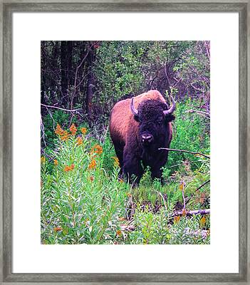 American  Bison Framed Print by M Images Fine Art Photography and Artwork