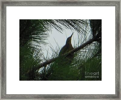 American Bitten Bird Framed Print