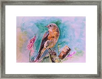 American Blue Bird Framed Print