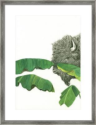 American Buffalo 1 Framed Print by Juan Bosco
