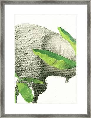 American Buffalo 2 Framed Print by Juan Bosco