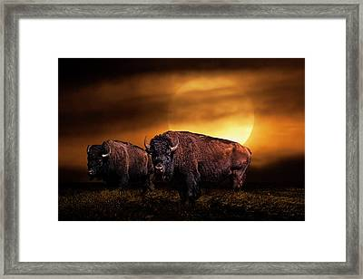 American Buffalo Under A Super Moon Framed Print by Randall Nyhof