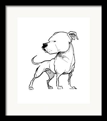 Bulldog Drawings Framed Prints