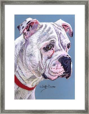 American Bulldog Framed Print by Stephanie Grimes