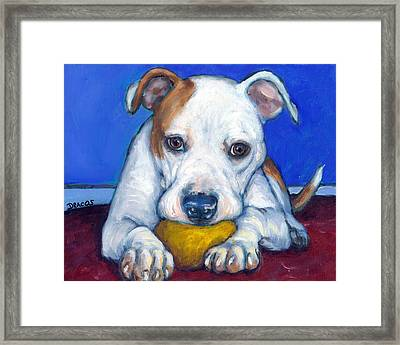 American Bulldog With Yellow Ball Framed Print by Dottie Dracos