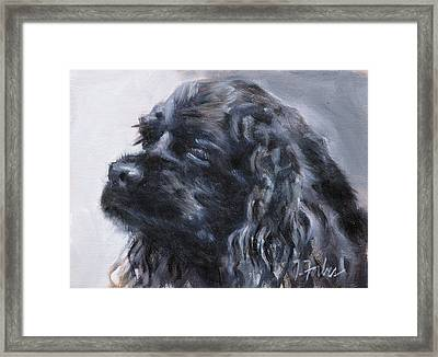 American Cocker Spaniel Framed Print by Isabel Forbes