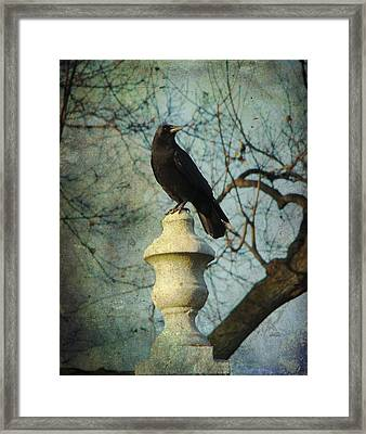 American Crow Framed Print