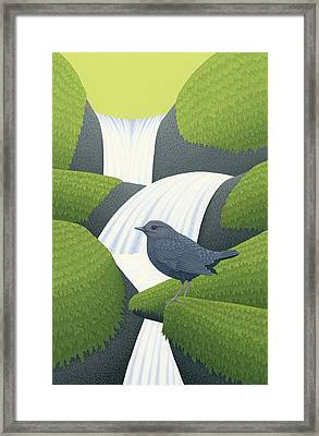 American Dipper Framed Print by Nathan Marcy