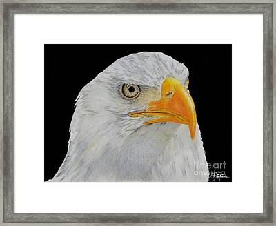 American Eagle Framed Print by Bill Richards