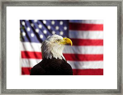 American Eagle Framed Print by David Lee Thompson