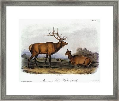 American Elk, 1846 Framed Print by Granger