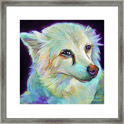 American Eskimo Framed Print by Robert Phelps