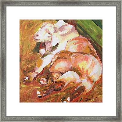 American Farm Sleepy Goats Framed Print