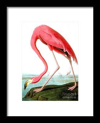 Pink Tree Framed Prints
