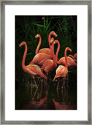 Framed Print featuring the photograph American Flamingo by Michael Cummings