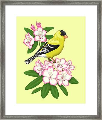 American Goldfinch And Coast Rhododendron Framed Print