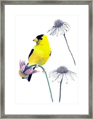American Goldfinch On Coneflowers Framed Print