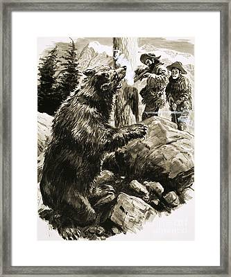 American Grizzly Bear Being Shot By Trappers Framed Print by CL Doughty