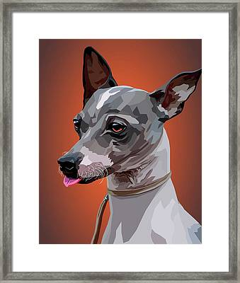 American Hairless Terrier On Color Background Framed Print