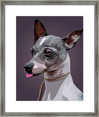 American Hairlessterrier,  Dog, Dogs, Doggy, Portrait, Hairlessterrier, Terrier, Terriers, Pet, Pets Framed Print