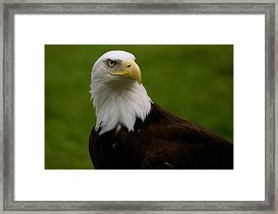 American Heritage Framed Print by Sonja Anderson
