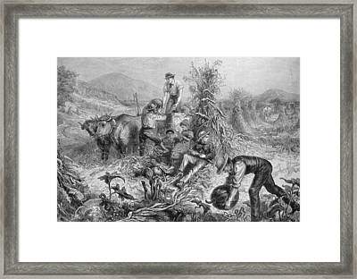 American Husbandry Framed Print by English School
