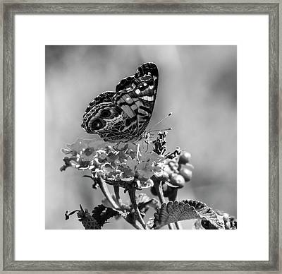 American Lady Bw Framed Print by Norman Johnson