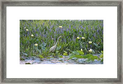 American Lotus - Great Egret Framed Print