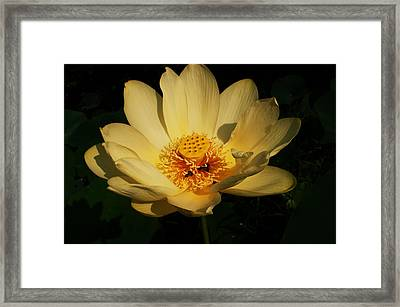 American Lotus Framed Print by Ron Kruger