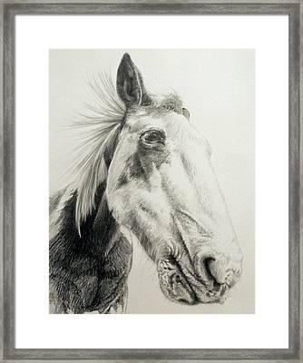 American Paint Horse Framed Print by Keran Sunaski Gilmore