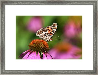 American Painted Lady Butterfly Framed Print by Christina Rollo