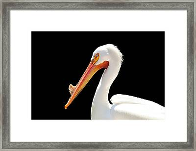 American Pelican Framed Print by Jeannie Burleson