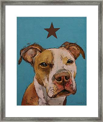 American Pit Bull Framed Print by Michael Creese