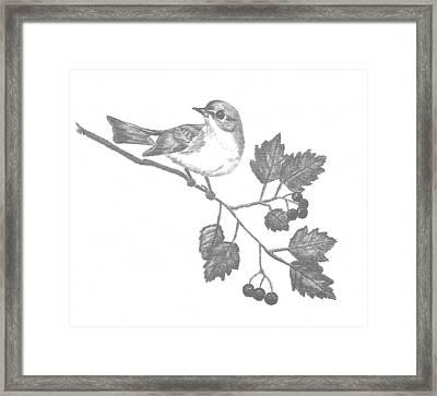 American Redstart Framed Print by Catherine Burton
