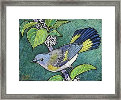 American Redstart Female Framed Print by Ande Hall