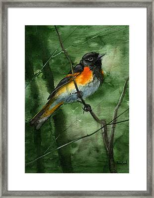 American Redstart Framed Print by Sean Seal