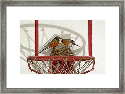 American Robin Pair At Nest Framed Print by Kenneth M. Highfill