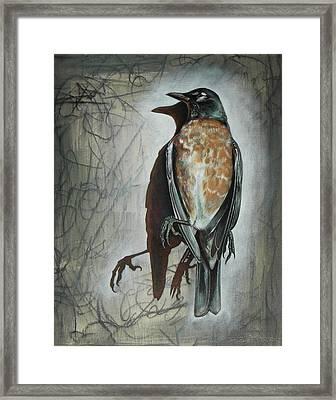 American Robin Framed Print by Sheri Howe
